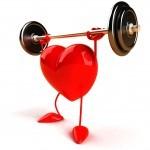 coeur muscler
